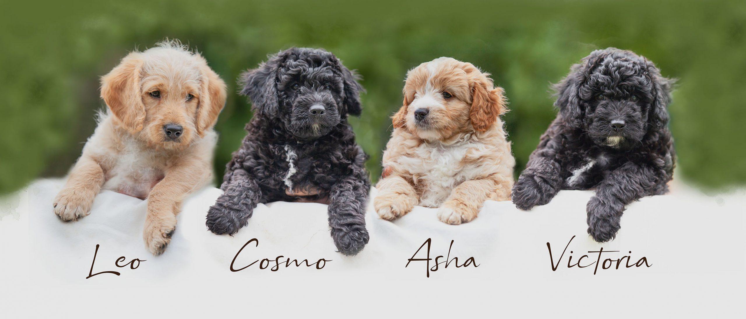 all the pups.jpg ed